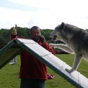 cours agility chien traineau